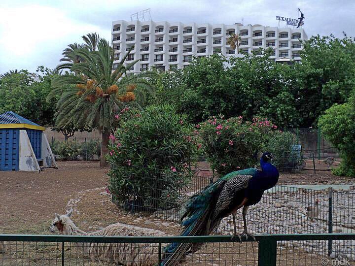 Valée des Oiseaux, Agadir