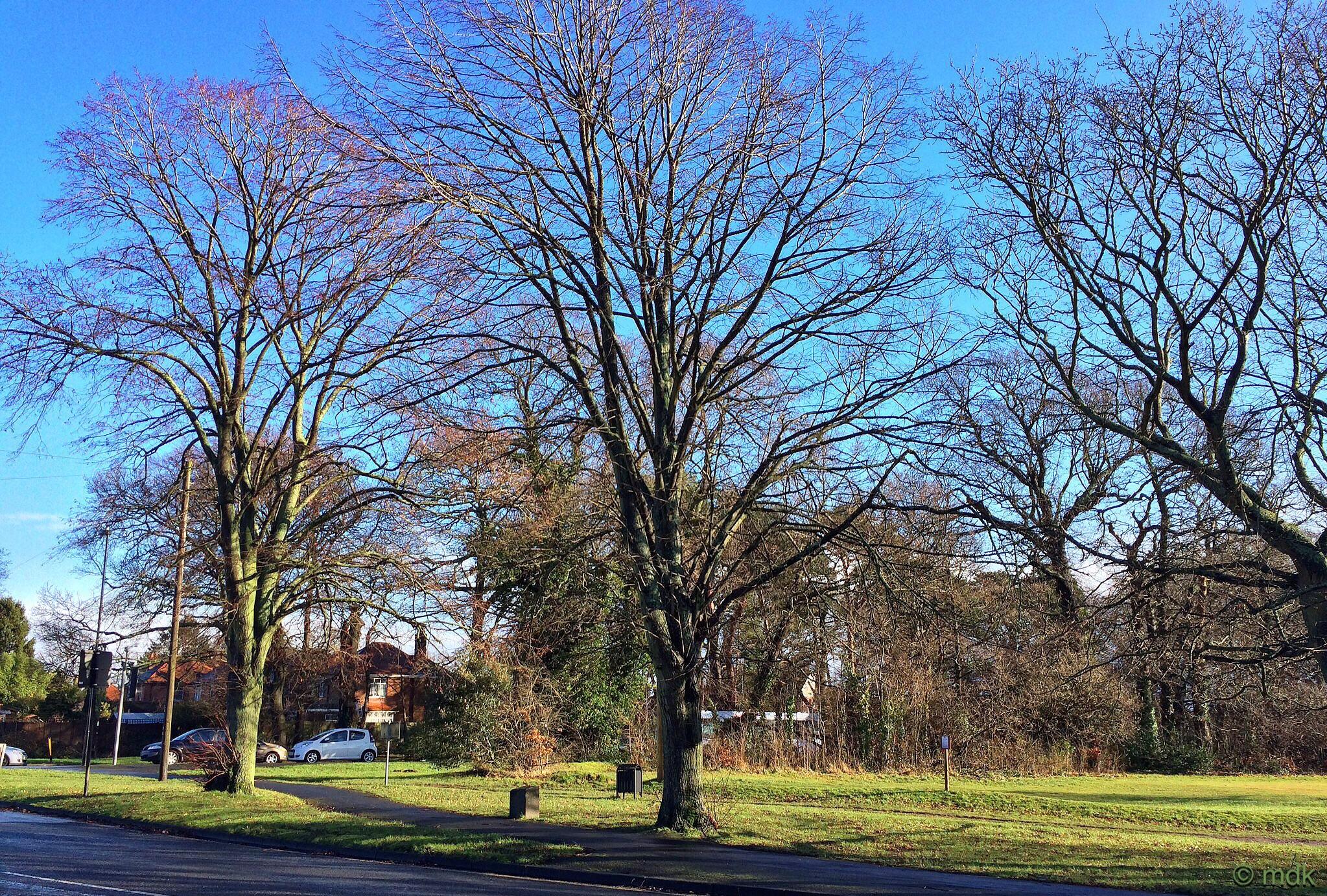 Freemantle Common