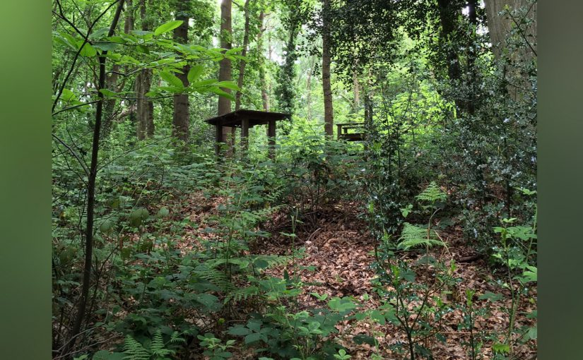 Waiting rooms, worries and woods